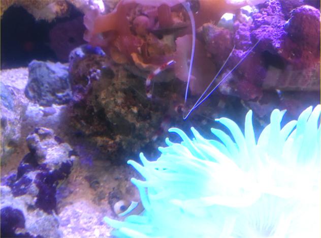 熱帯魚 昆虫 爬虫類 水草