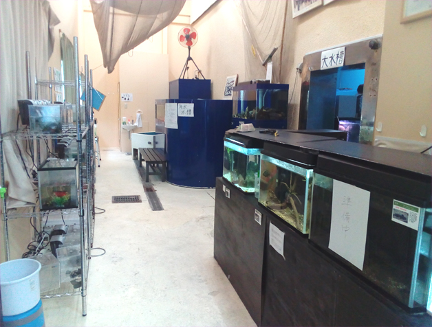 柳川有明水族館
